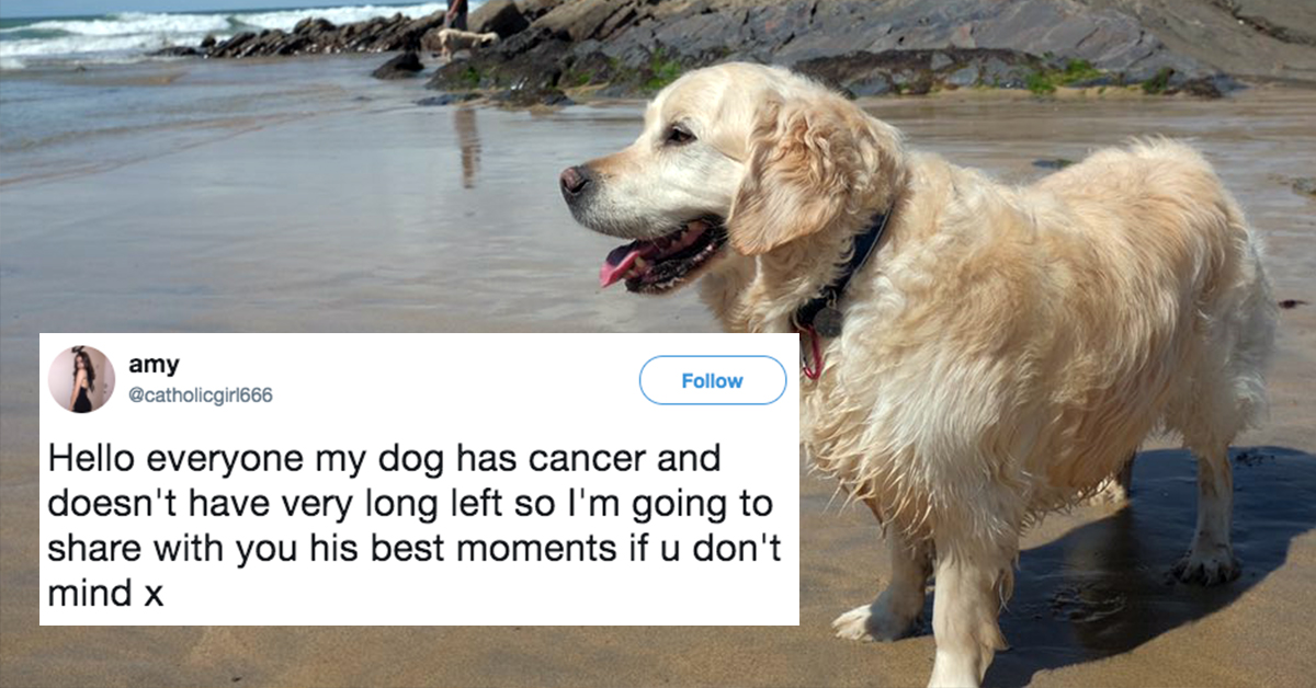 This Owner Shared Her Dying Dog's Best Moments And I'm Not Crying You're Crying!