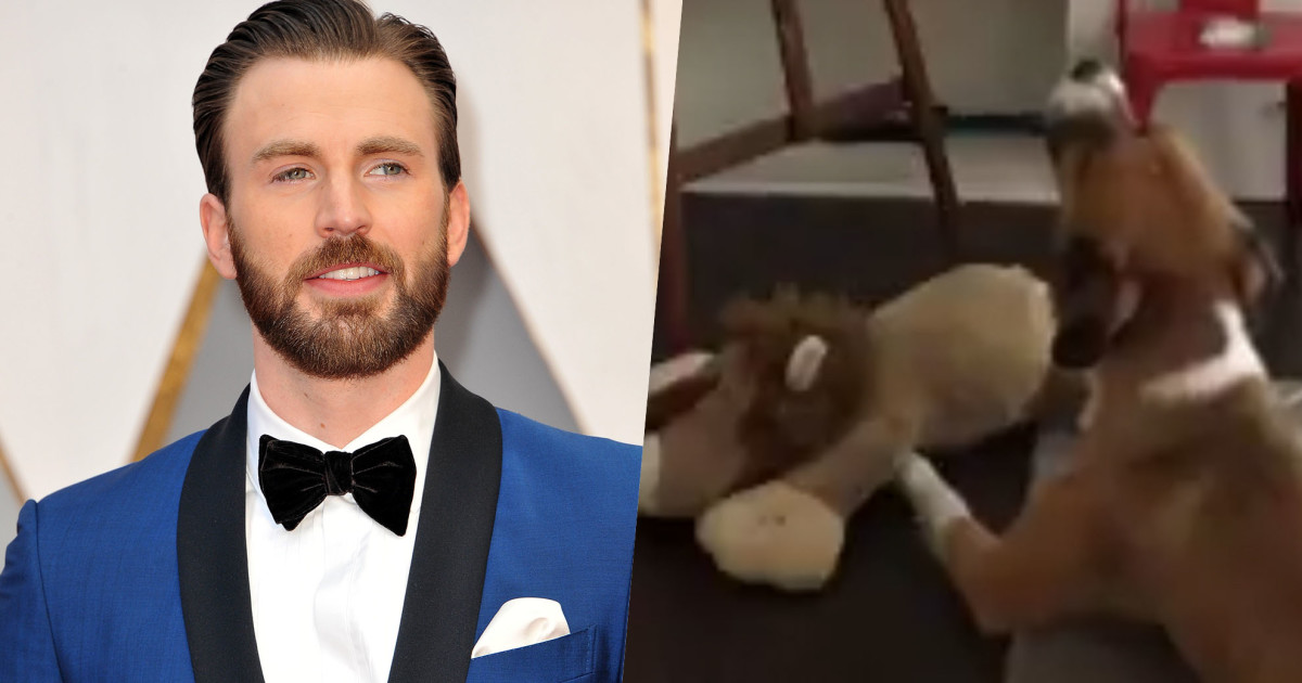 Chris Evans' Dog Just Softly Sang To His Beloved Stuffed Lion, And Our Hearts Can't Take It