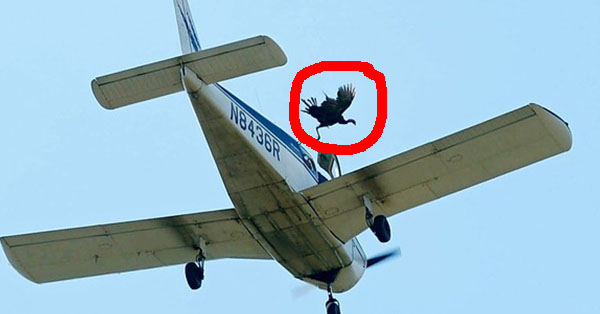 Dropping Turkeys Out Of Planes Sounds Pretty Cruel–But Apparently, It Isn't Illegal