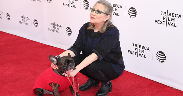 Carrie Fisher's Dog Recognized Her In 'The Last Jedi' And I'm Not Crying, You're Crying