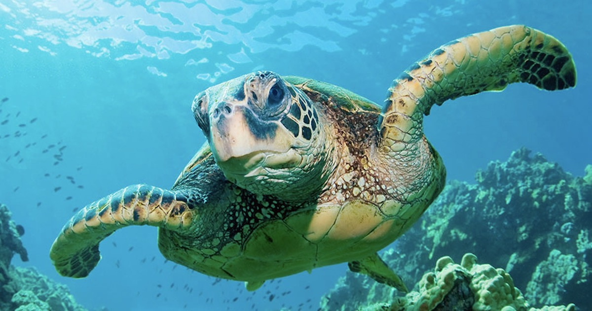 Sea Turtle Found Tangled Up In Floating Mass Of Cocaine Bricks—And Humanity Strikes Again