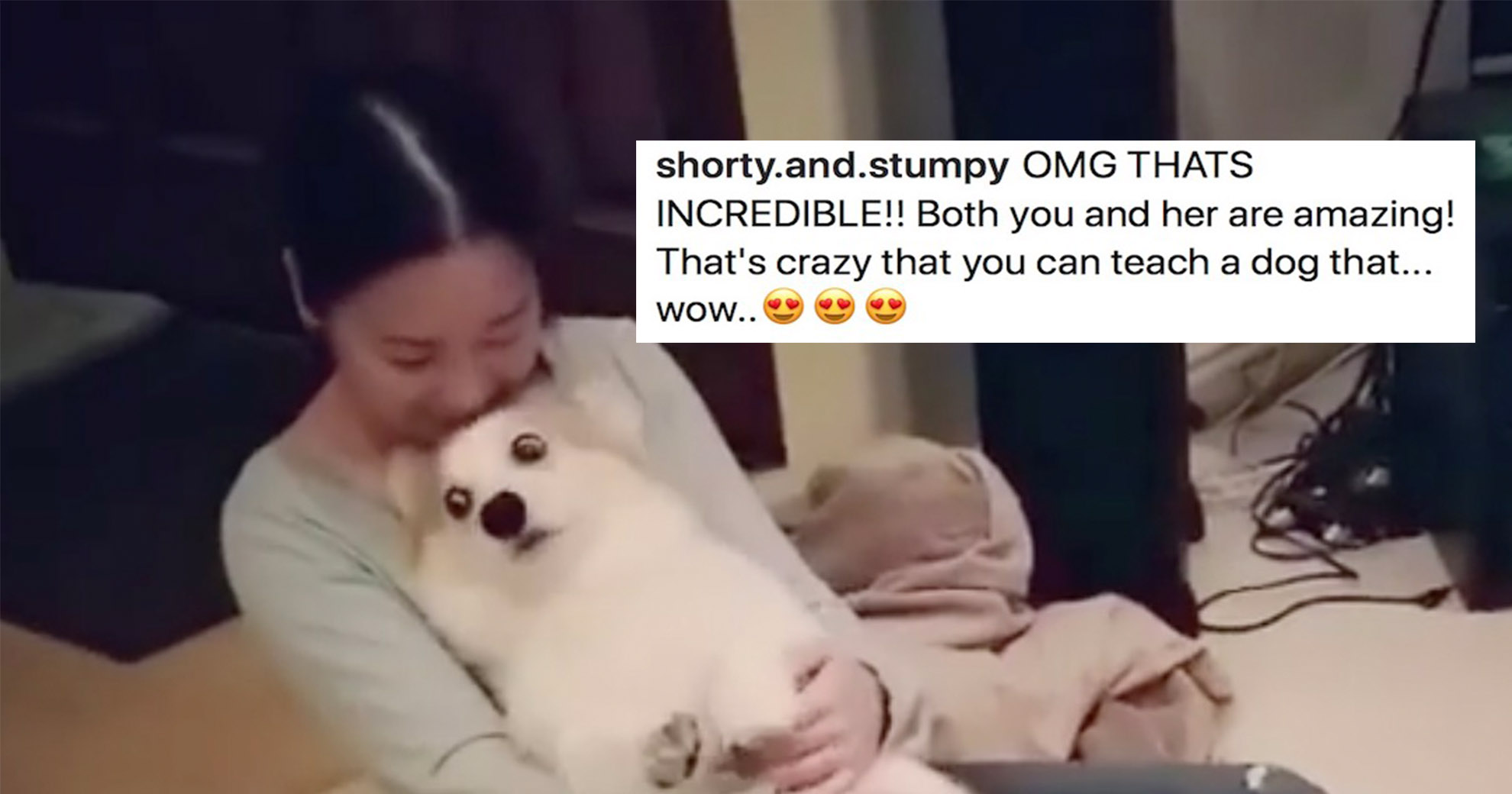 Brave Corgi Does A 'Trust Fall', And The Internet Is In Love