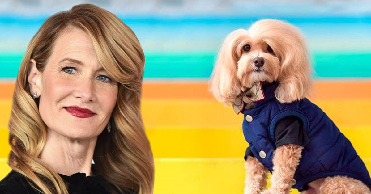 23 Pets Who Look Exactly Like Celebrities Because Why Not?