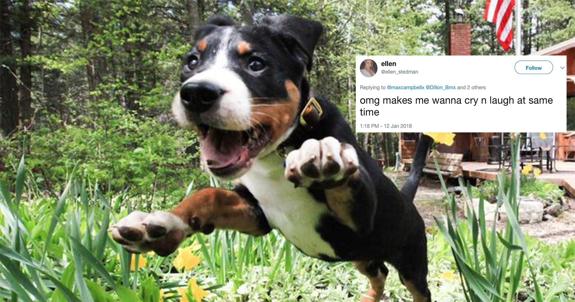 Dog Gets A Little Too Excited To See Its Human—And Twitter Is Rolling With Laughter