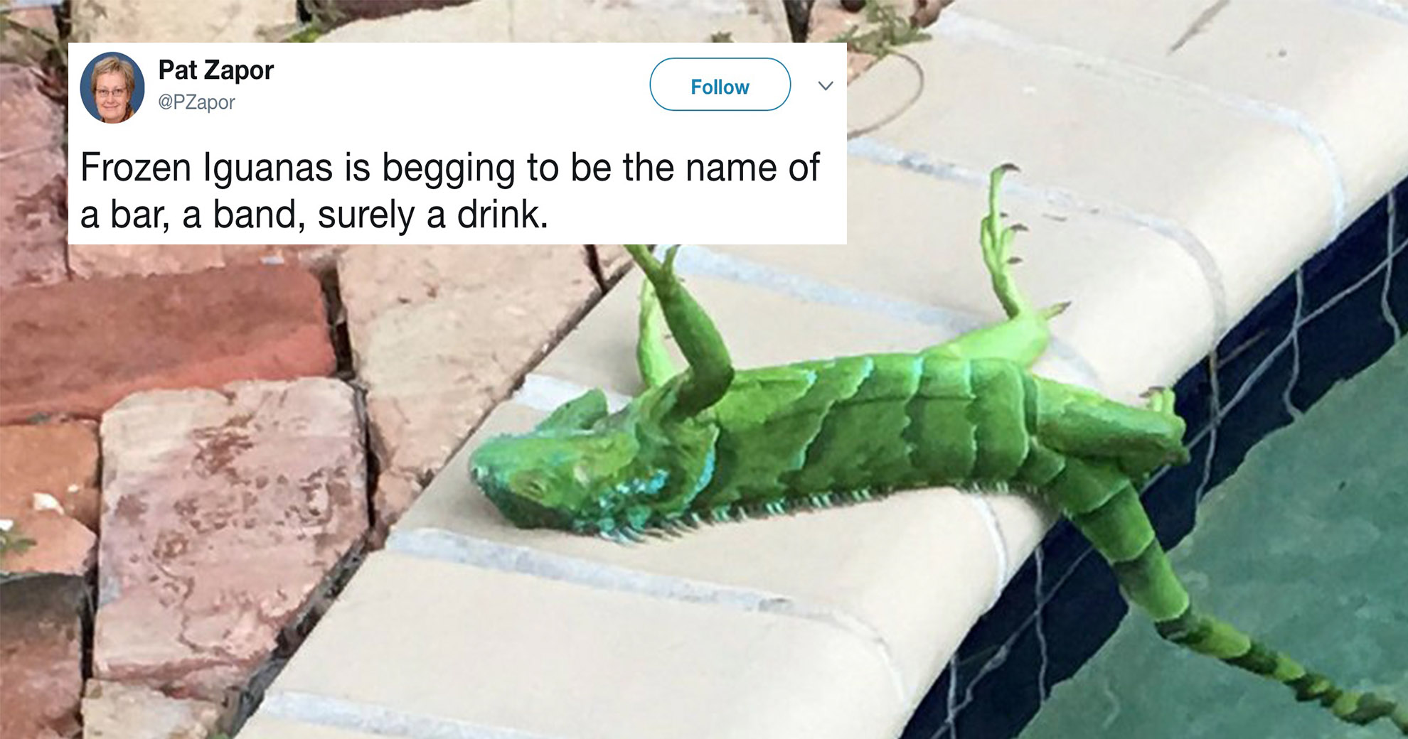Frozen Iguanas Are Literally Falling From Trees—And People Are Rightfully Creeped Out