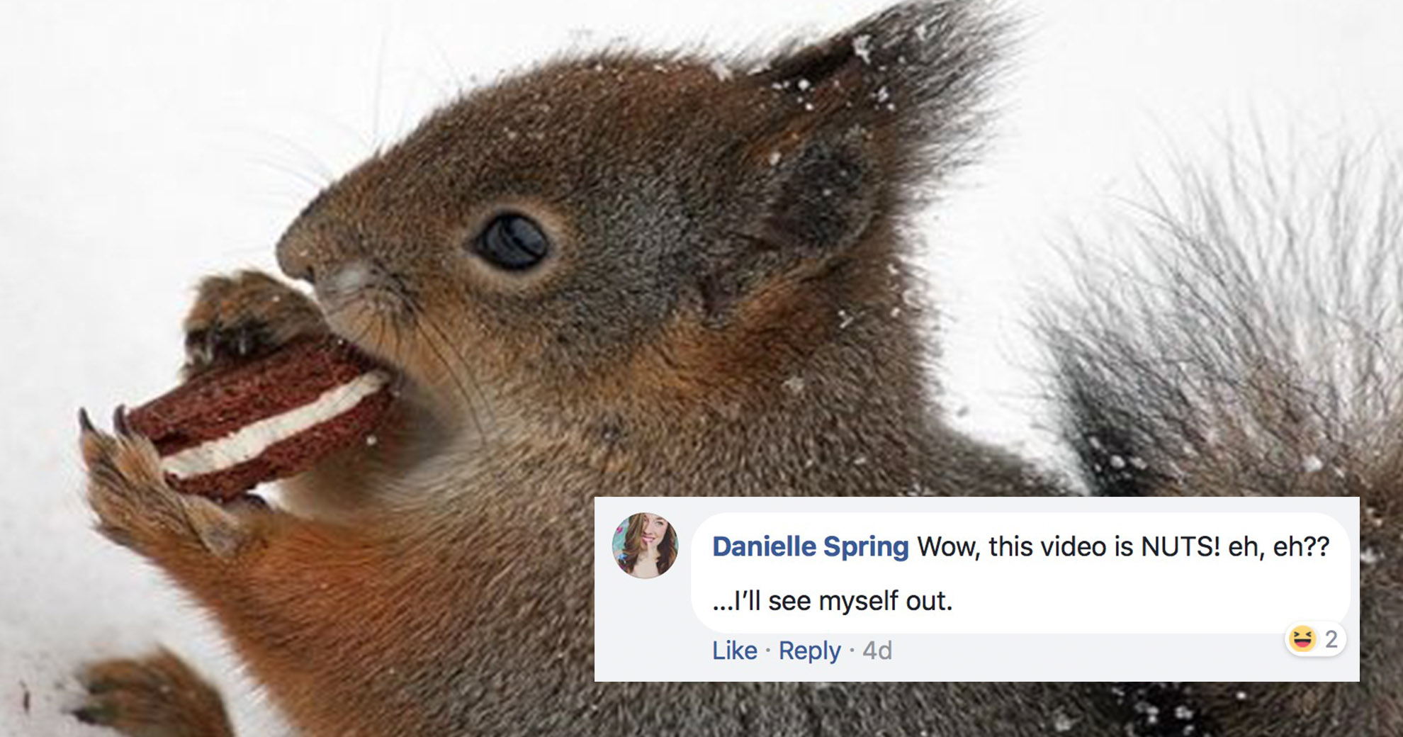 Footage Of Squirrel Stealing Cookies And Attacking The Police Takes Facebook By Storm