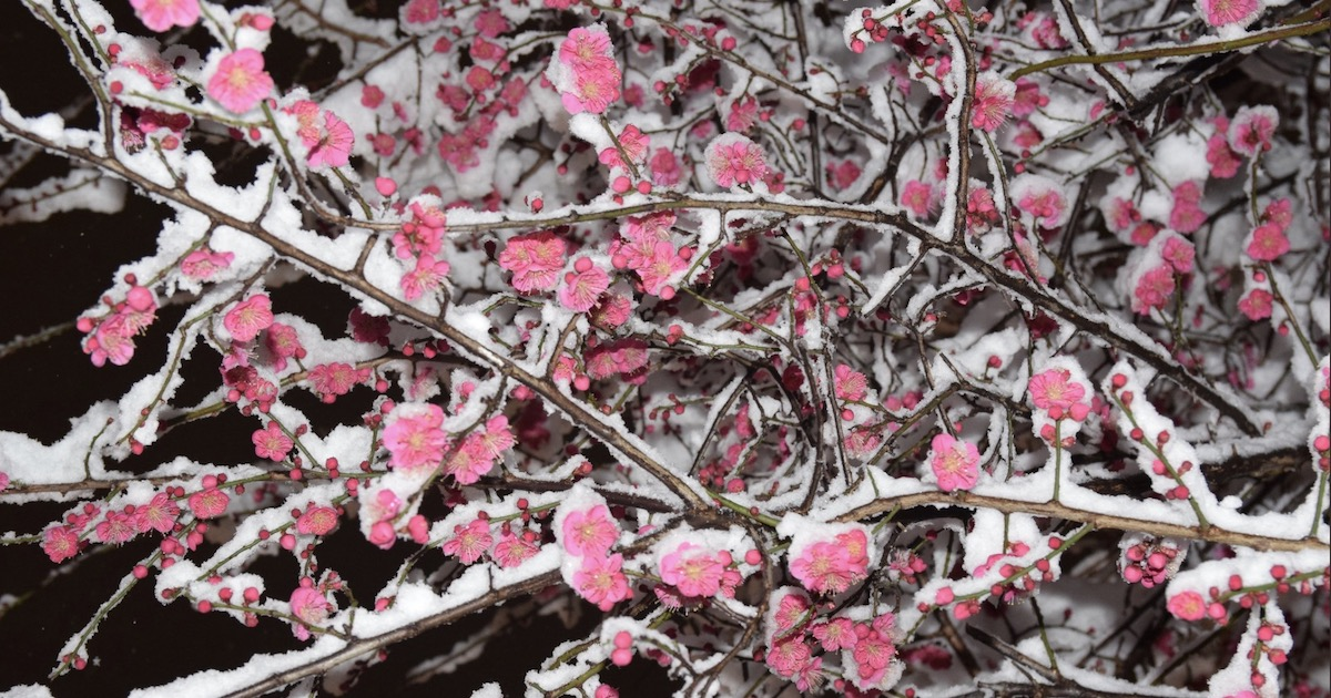 Photos Of A Snow-Covered Tokyo Emerge Online—And It's Very Pretty