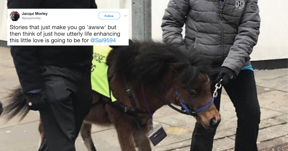Digby The Miniature Horse Is The UK's First-Ever Guide Horse