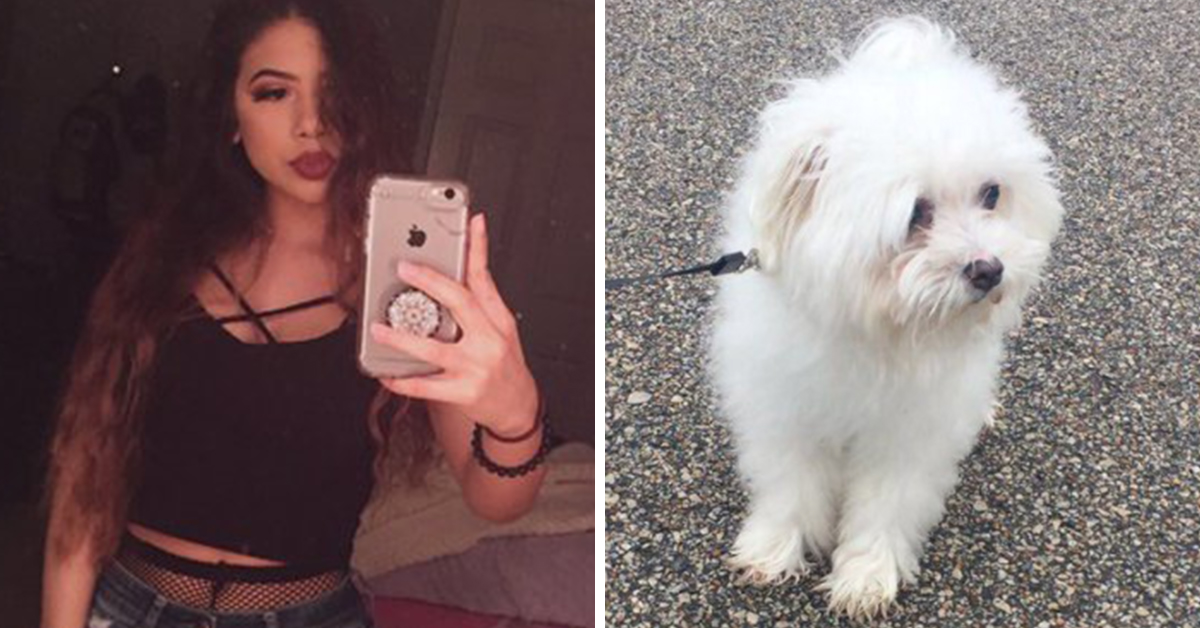 Woman Shares Before-And-After Pictures After A Groomer 'Did Her Dog Dirty'