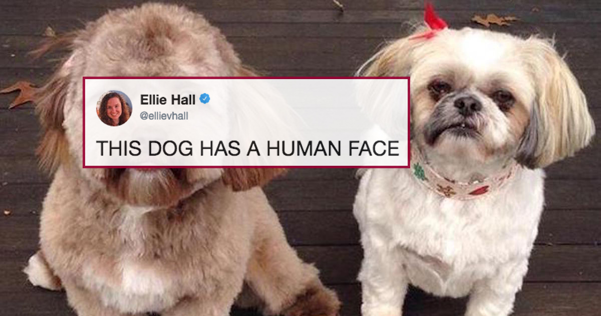 Twitter Is Debating Which Celebrity This Dog With A Disturbingly Human Face Looks Like