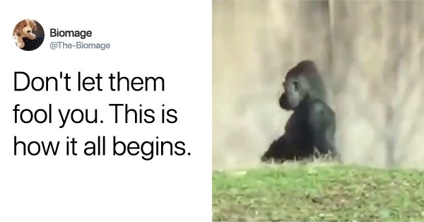 Gorilla's Eerily Human-Like Walk Is Sparking 'Planet Of The Apes' Conspiracy Theories