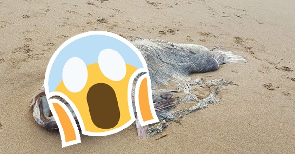 This Mysterious 'Monster Fish' That Washed Up On A Beach Is Already Giving Everybody Nightmares