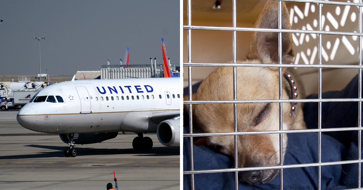 United Airlines Passenger Finds Pet Dog Dead After Being Forced To Put Him In Overhead Storage Compartment