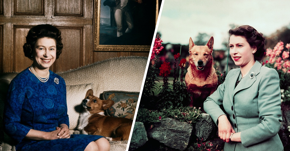 Many Mourn The Loss of The Queen's Last Remaining Corgi