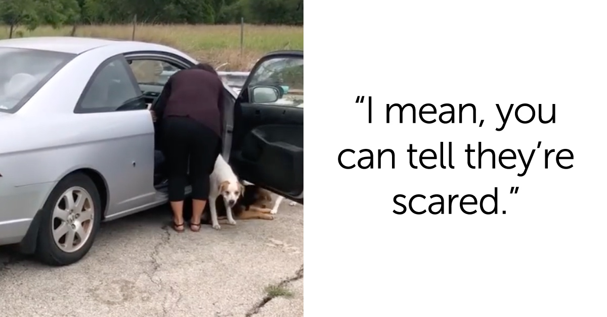 Video Of Texas Woman Abandoning Four Dogs Has Animal Advocates Livid