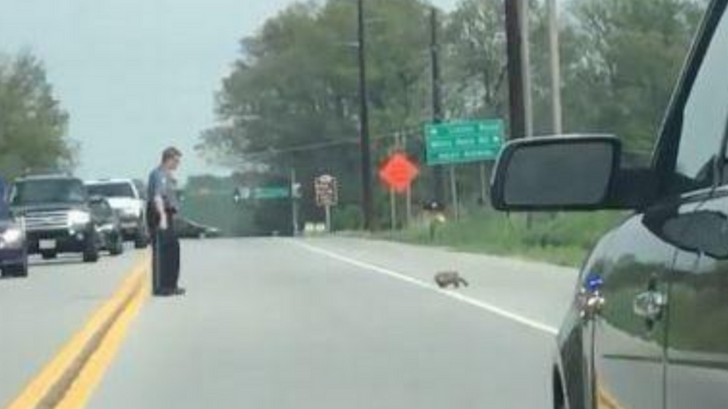Disturbing Video Shows Maryland Cop Using Lethal Force On A Groundhog Trying To Cross The Road