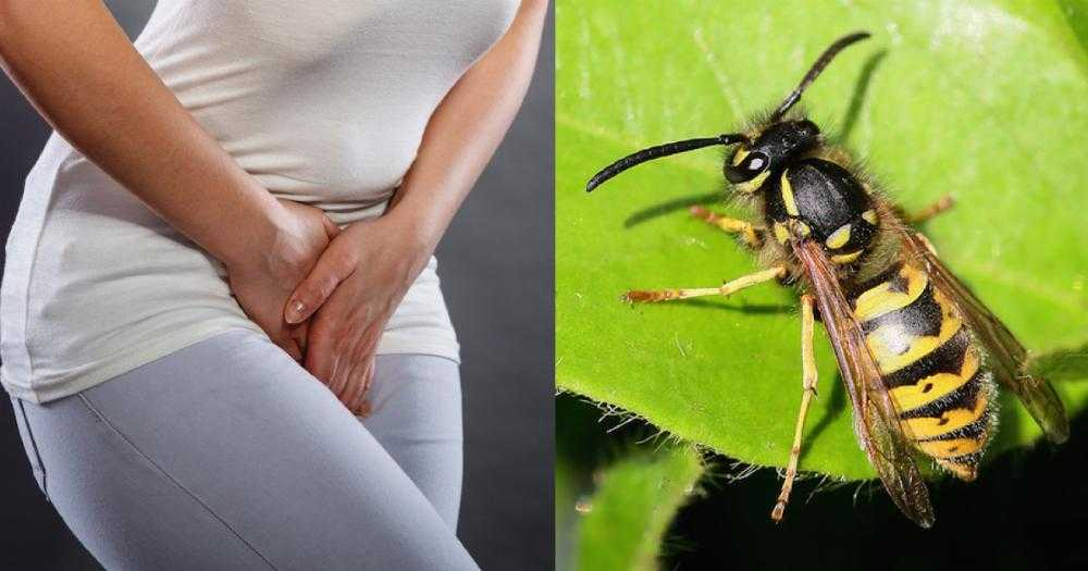 Women Are Putting Wasp Nests In Their Vaginas And I Kind Of Don't Even Want To Tell You Why